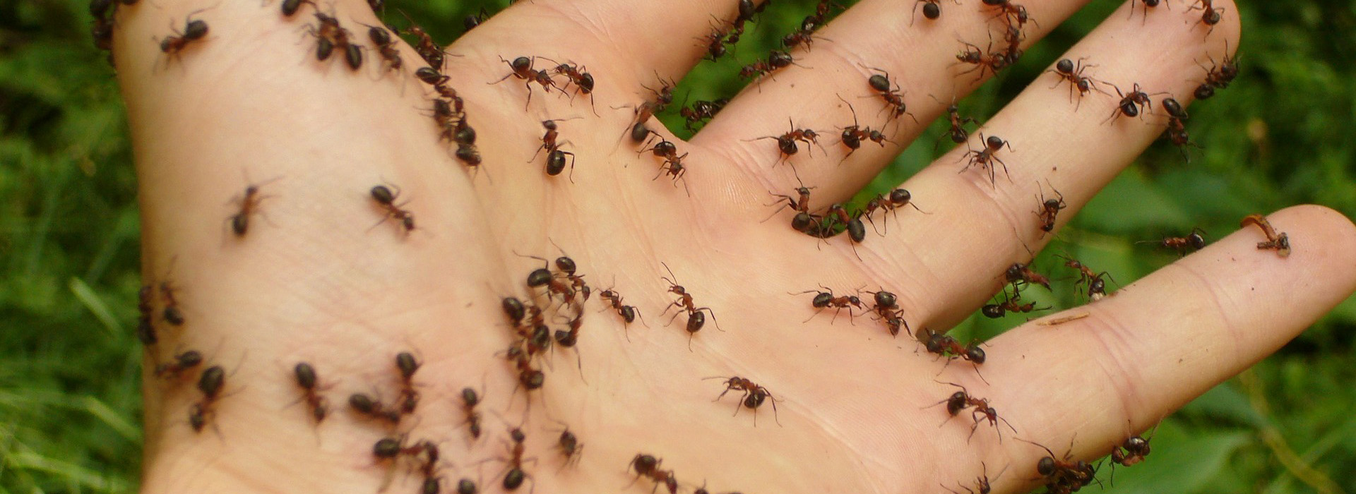 Ant Control - MICROBEE Environmental - London- 01