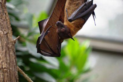 Bat Survey - Microbee Ecology