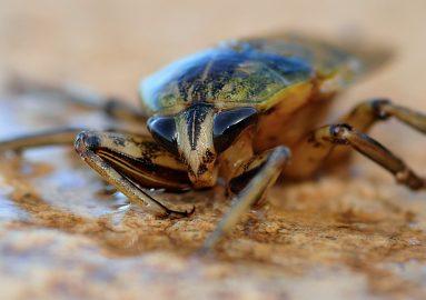 Cockroach Pest Control - MICROBEE PEST CONTROL