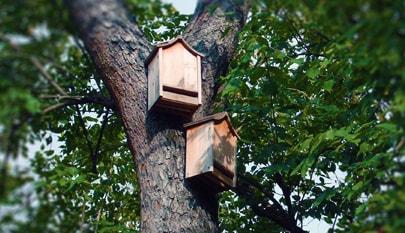 Nest Box - Microbee Ecology 01-min