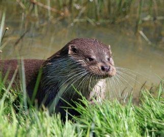 Otter Survey - Microbee Ecology