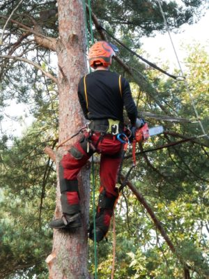 Tree Surgeon - MICROBEE TREE MANAGEMENT