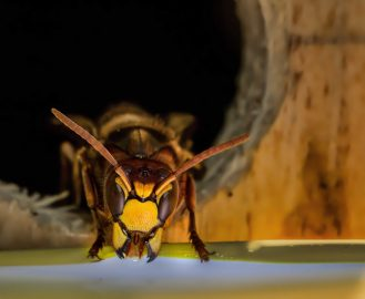Wasp Pest Control - MICROBEE PEST CONTROL