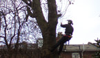 Crown Reduction - MICROBEE TREE SURGEONS