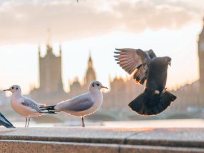 service-bird-control