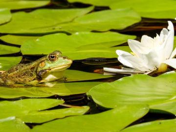 Pond Management - MICROBEE environmental