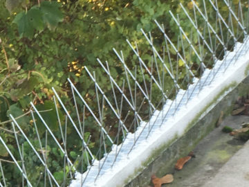 Bird Spikes - Microbee bird control 10