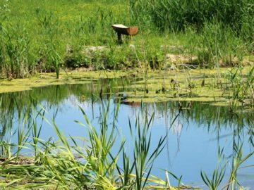 Habitat Management - Ecology - MICROBEE Environmental 06