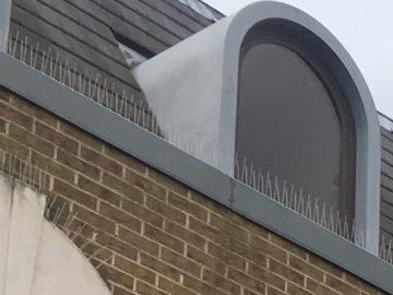 Bird Spikes - MICROBEE environmental London B02-min