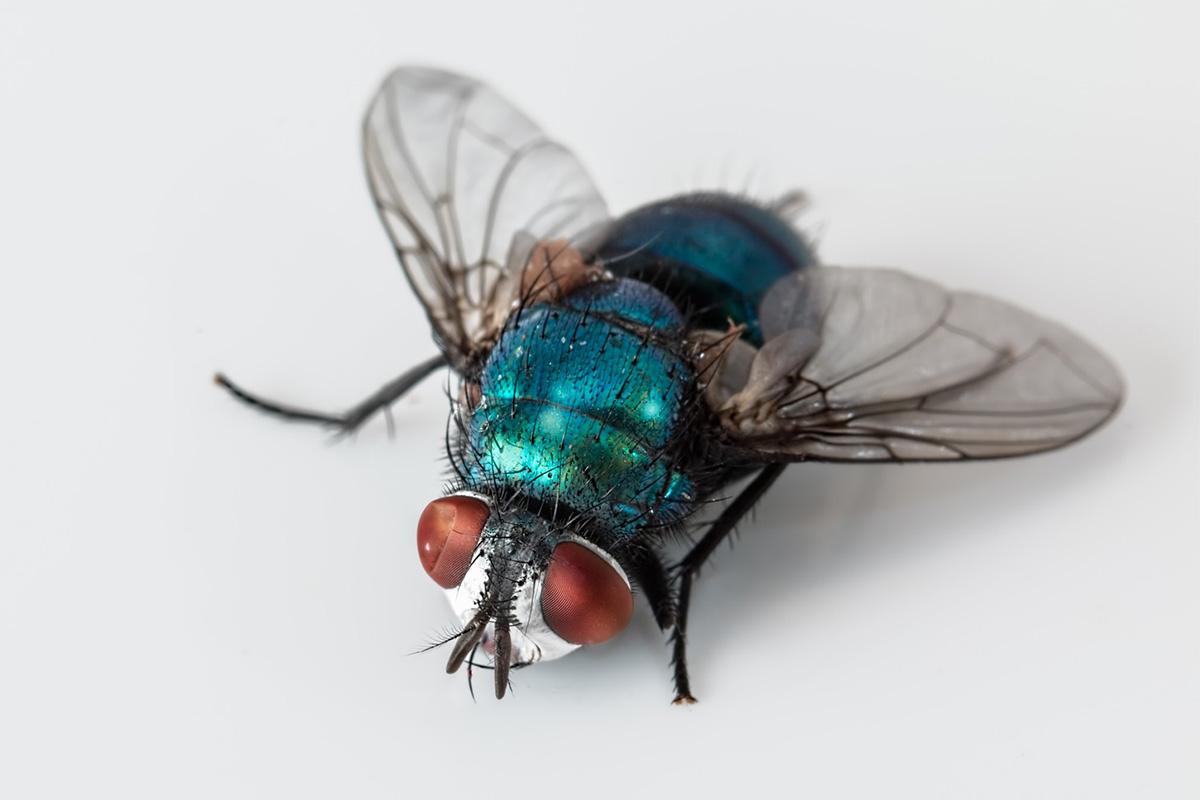 prevent fly infestation