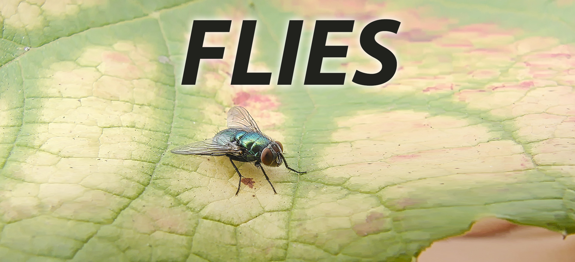 do you have a fly problem and are based in london england? contact microbee to solve it