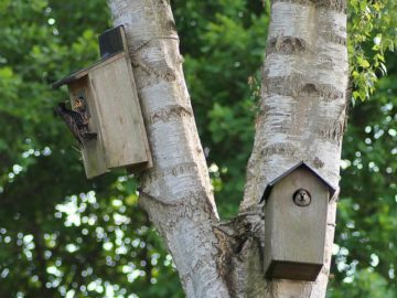 Photo of bird boxes